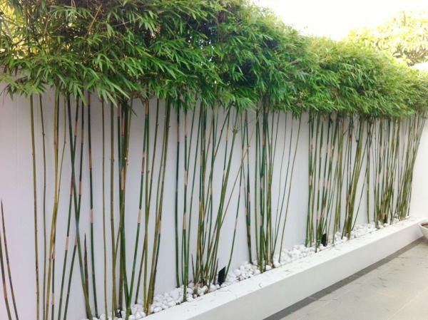 bambus im kübel zaun ideen