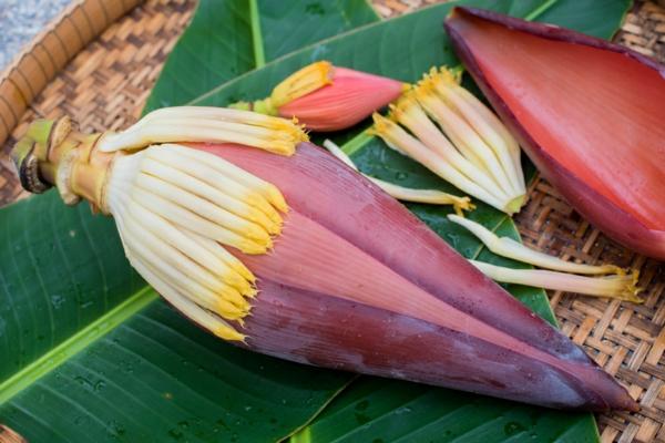 bananenblüte zubereiten tipps