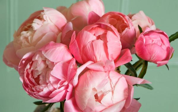 ein großer Blumenstrauß Pfingstrosen