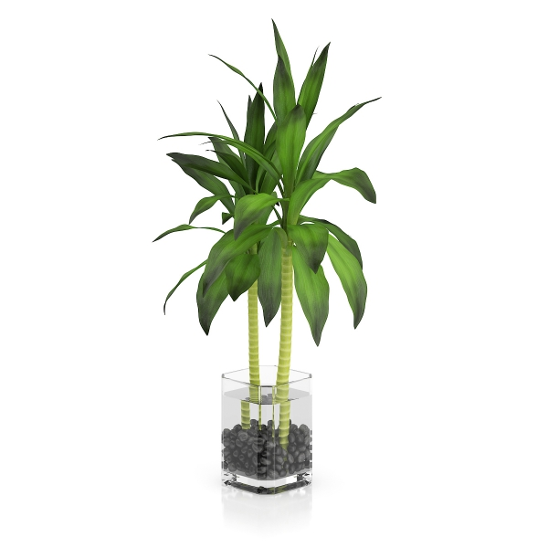 glas pflanzen ideen bambus im kübel