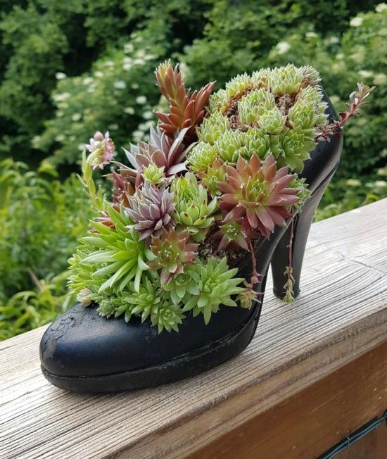 high heels damenschuhe pflanzkübel sukkulenten