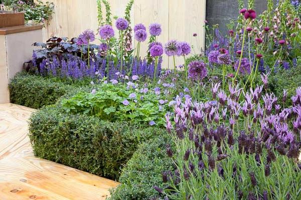 kräutergarten bienenfreundliche stauden lavendel salbei zierlauch