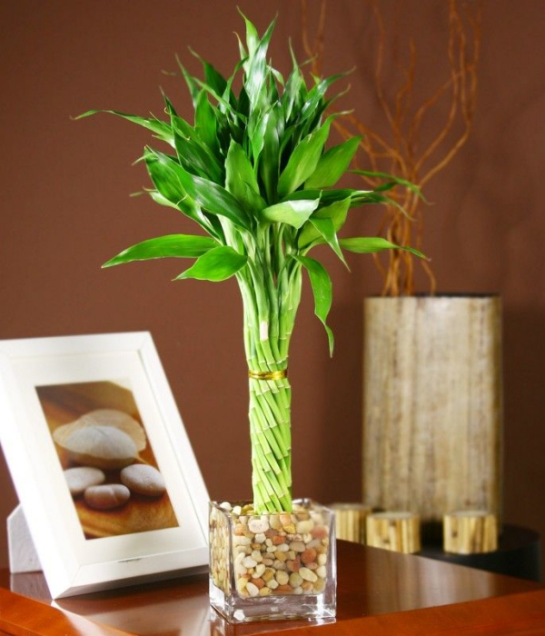 regal - blumenvasen ideen - bambus im kübel