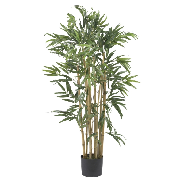 topf in einem bambsu bambus im kübel
