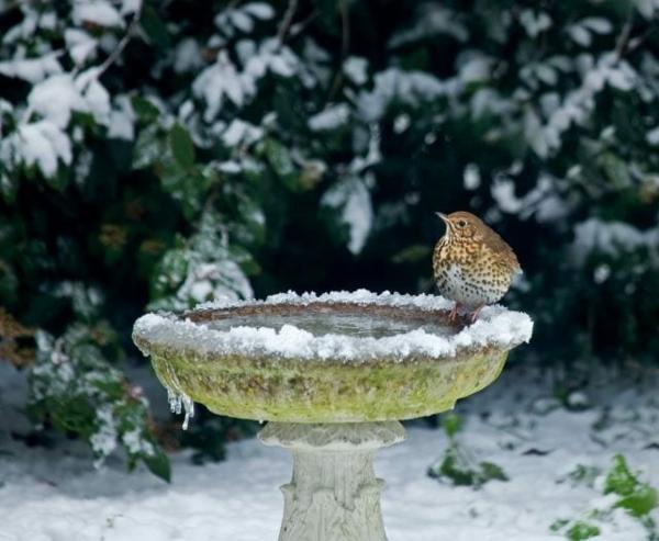 vogeltränke im winter