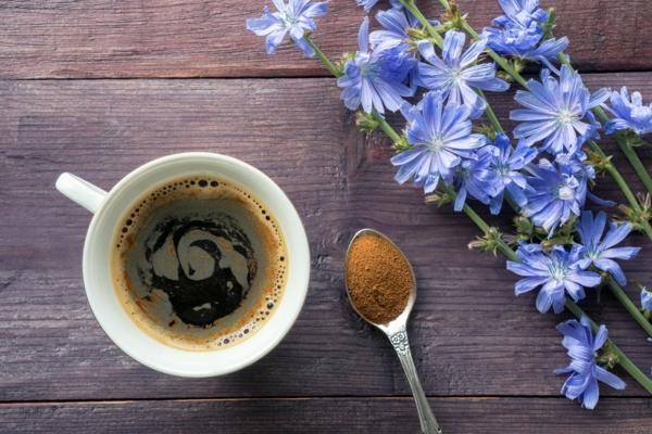 wegwarte zichorie kaffee gesund