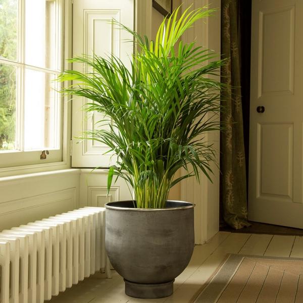 wohnzimmer einrichtung bambus im kübel ideen