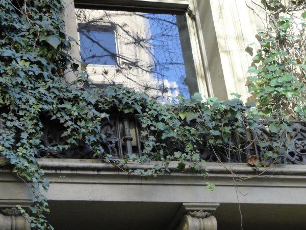Balkon bepflanzen - Balkon am Fenster