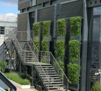 Machen Sie durch rankende Pflanzen den Balkon zum speziellen Ort!
