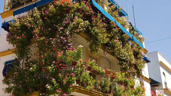 Balkon bepflanzen - tolle Ideen für die Balkongestaltung