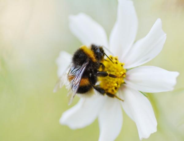 Bee Home Diese DIY Ikea-ähnlichen Häuser könnten helfen, die Bienen zu retten niedliche flauschige bienen brauchen ihre hilfe