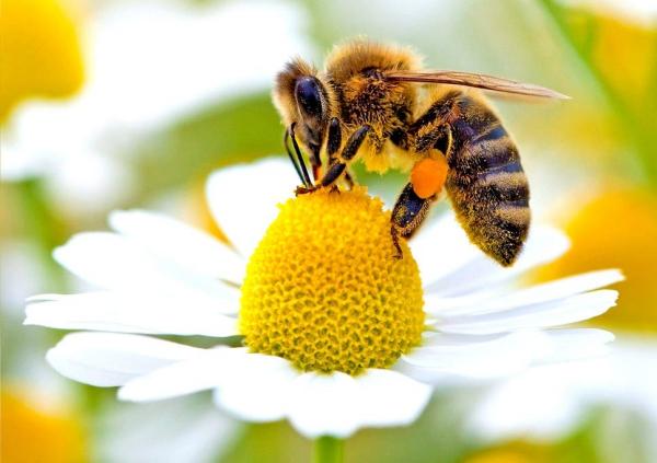 Bee Home Diese DIY Ikea-ähnlichen Häuser könnten helfen, die Bienen zu retten solitärbienen häuser umwelt schutz