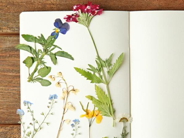 Blumen pressen Methoden Blumen arangieren