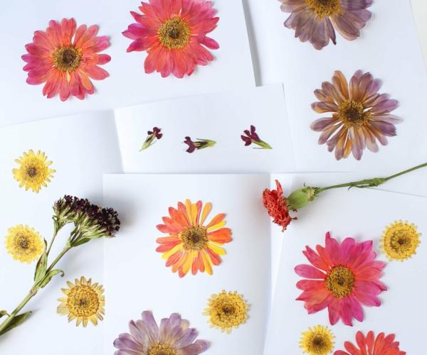 Blumen pressen Methoden Blumen trocknen und arangieren Dekoideen