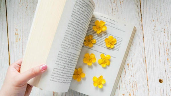 Blumen pressen Methoden Buch zwischen Buchseiten