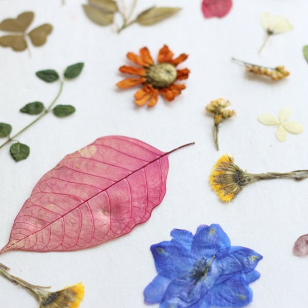 Blumen pressen Methoden arangieren Dekoideen