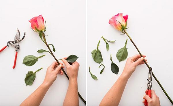 Blumen pressen im Buch Rosen Vorbereitung