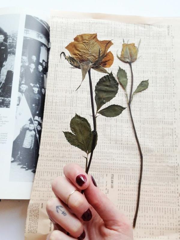 Blumen pressen im Buch Rosen