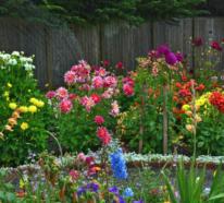 Dahlien auf dem Balkon und im Garten pflegen – das sollten Sie über diese schönen Blumen wissen