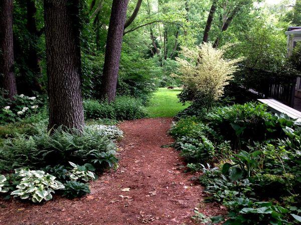 Ein wunderschöner Wald - Naturgarten anlegen