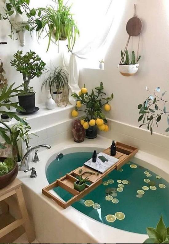 Grün im Bad Badewanne Zitronenscheiben im Wasser kleines Fenster genügend Tageslicht Badpflanzen