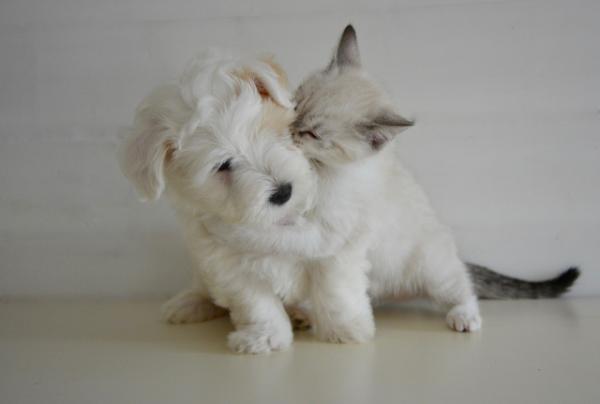 Hundeallergie - Hunde und Katze - tolle Ideen