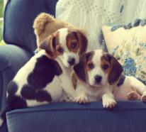 Wünschen Sie sich einen Hund trotz Hundeallergie? Das müssten Sie Bescheid wissen