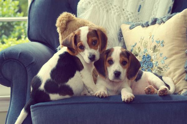 Hundeallergie - ein blaues Sofa