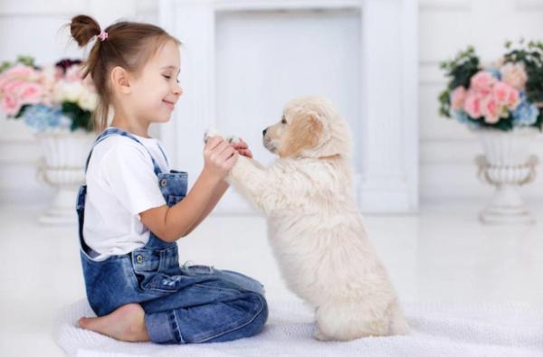 Hundeallergie -tolle Ideen fürs Zuhause