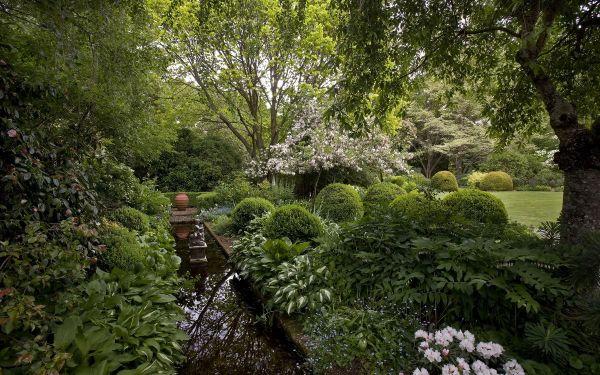 Im Bild - ein schöner Wald - Naturgarten anlegen