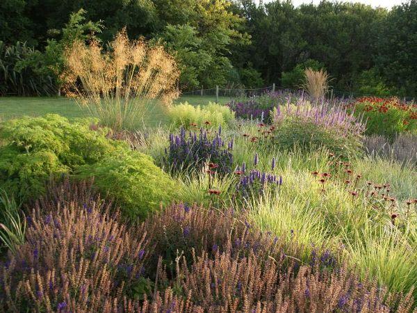 Naturgarten anlegen Felsenblumen Ideen