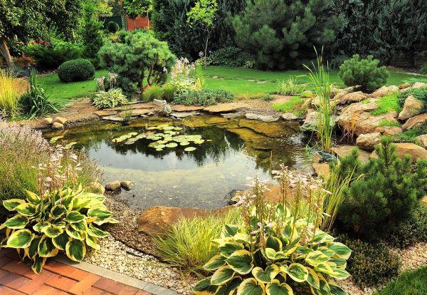 Naturgarten anlegen - See mit schönen Pflanzen