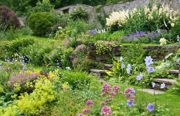 Naturgarten anlegen - tolle Wiesenblumen