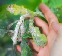 Schildläuse bekämpfen: Mit diesen Tipps werden Sie die lästigen Schädlinge los!