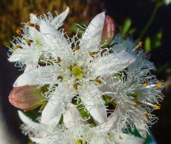 Tolle Idee für Blumen Pflanze des Jahres