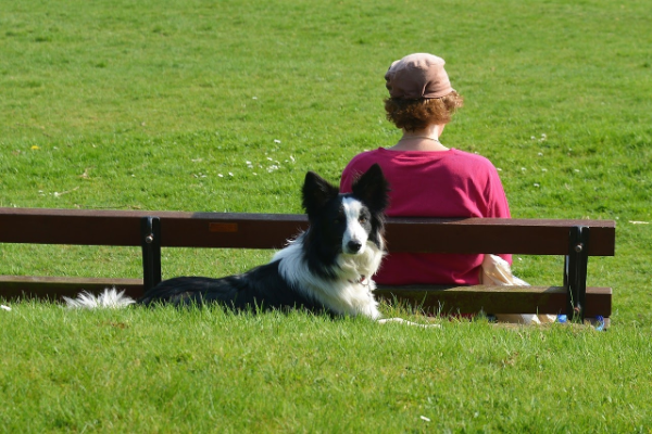 Wiese mit eine Hund - Hundeallergie