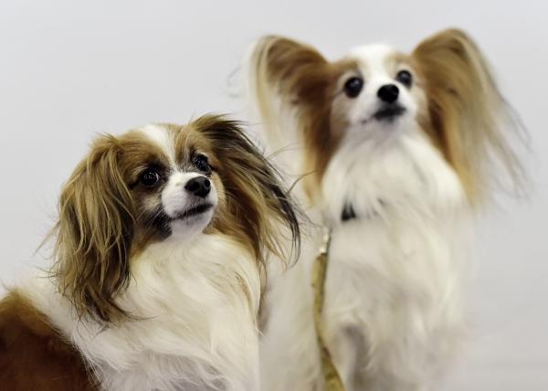 Zwei sehr süße Tiere - Hundeallergie