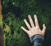 Waldbaden – ein uraltes Naturprinzip wird neu entdeckt