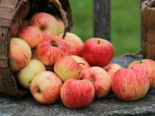 glyx diät frische äpfel