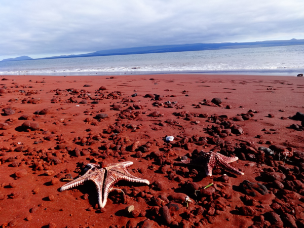 schöne Strände weltweit Red Beach Rabida Galapagos ein romantischer Ort roter Sandstrand Seelöwen