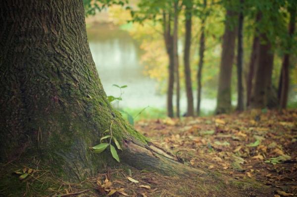 waldbaden achtsamkeit naturtherapie