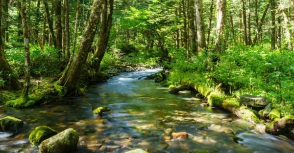 waldbaden gesunde therapie aus japan