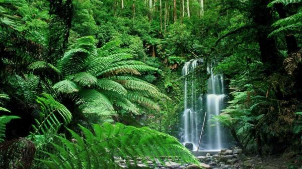 waldbaden natur gesunde therapie