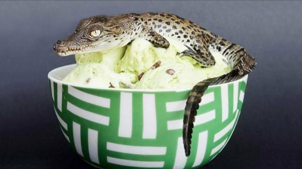 Ausgefallene Eissorten aus aller Welt verrückte Geschmacksrichtungen Krokodilei