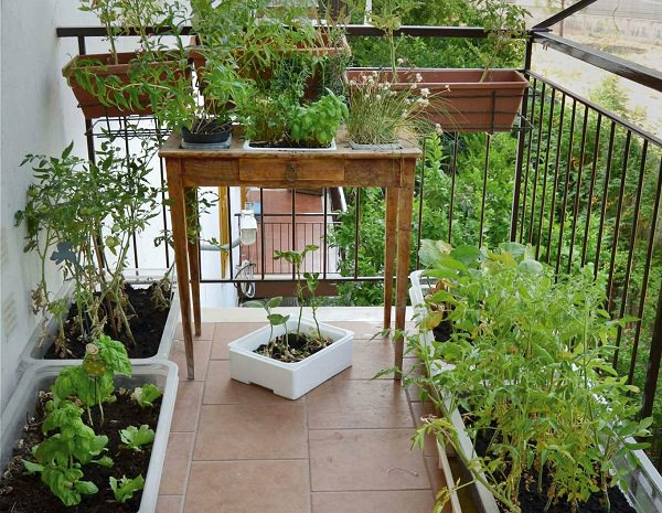 Balkongarten Kräuter auf dem Balkon Kräutergarten Balkonkräuter Töpfe