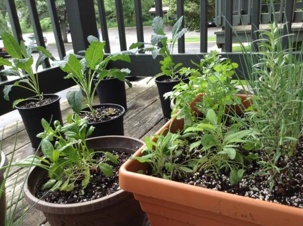 Balkongarten anlegen Kräuter auf dem Balkon einpflanzen Kräutergarten