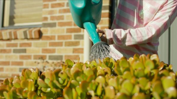 Regenwasser nutzen Gartenpflanzen bewässern