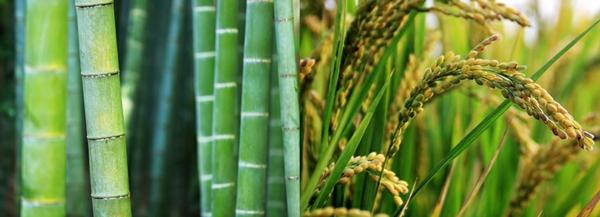bambus plastikalternative für werbeartikel