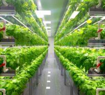 Hydroponik – der innovative Gemüseanbau auf der Fensterbank