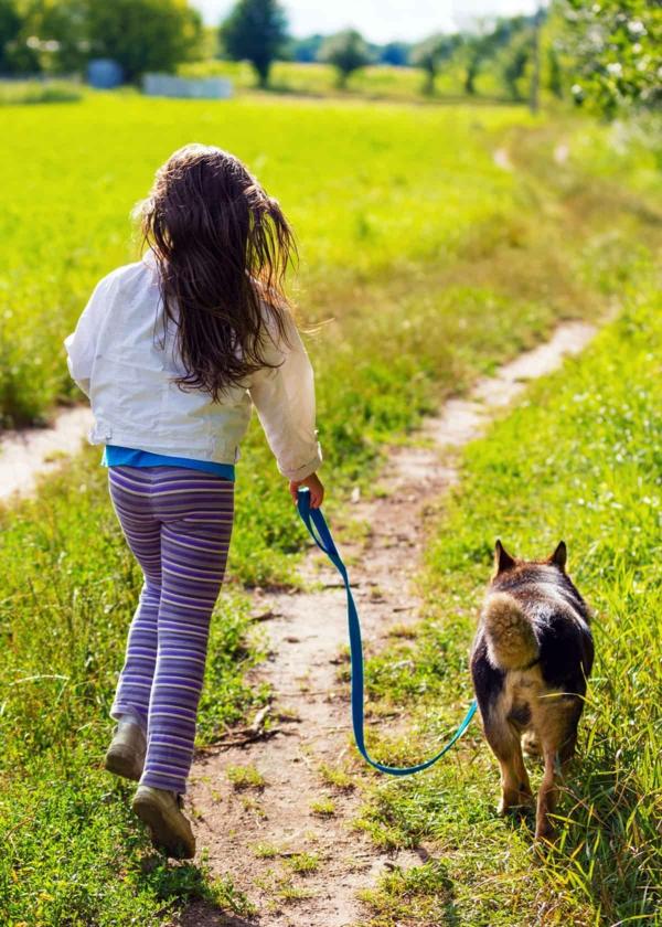 kind hund spaziergang zeckenbiss erkennen